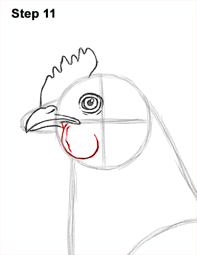 how to draw a chicken hen bird 11