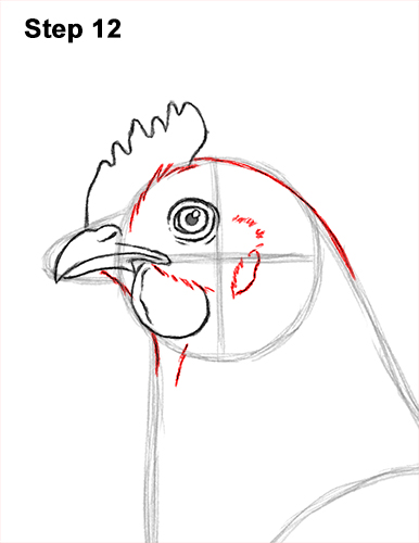 how to draw a chicken hen bird 12 step