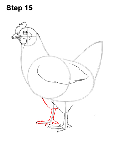 how to draw a chicken hen bird 15