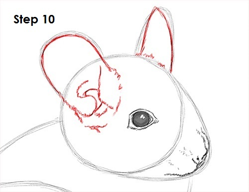 Draw Chinchilla 10