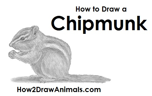 Draw a Chipmunk