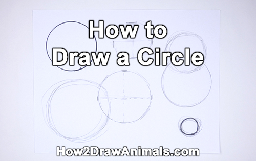How to Draw a Circle Easy Simple Beginner Basic Art Fundamental