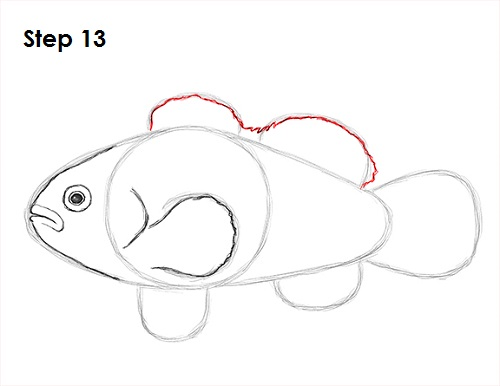 Draw Clownfish 13