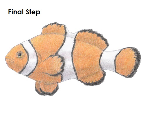 Draw a Clownfish