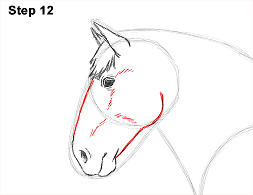 Draw Horse Clydesdale Shire 12
