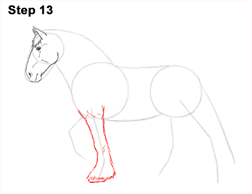 Draw Horse Clydesdale Shire 13