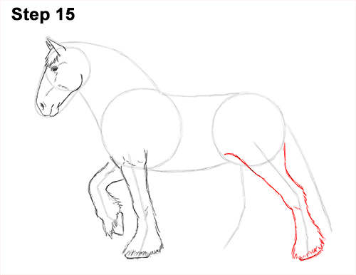 Draw Horse Clydesdale Shire 15