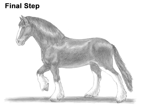 Draw Horse Clydesdale Shire