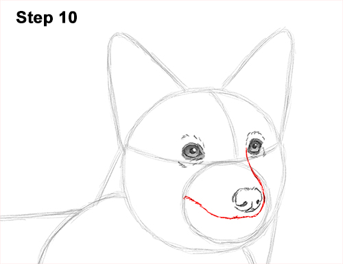 Draw Welsh Corgi Dog 10