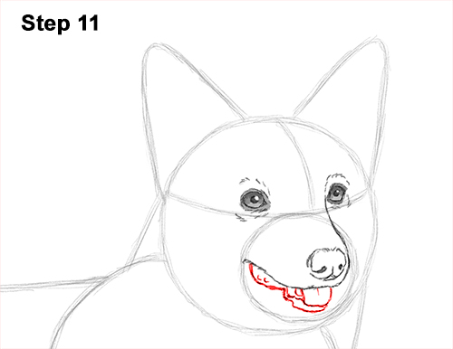 Draw Welsh Corgi Dog 11