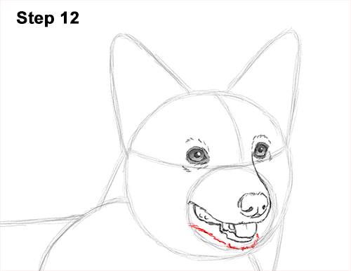 Draw Welsh Corgi Dog 12