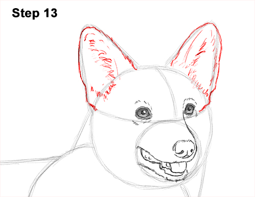 Draw Welsh Corgi Dog 13