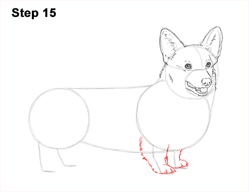 Draw Welsh Corgi Dog 15