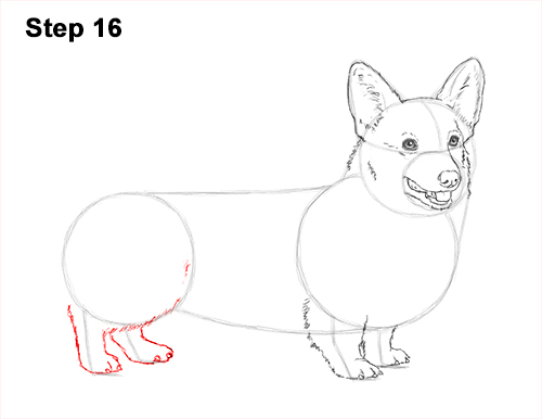 Draw Welsh Corgi Dog 16