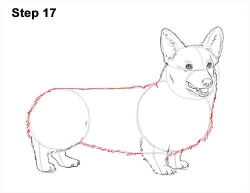 Draw Welsh Corgi Dog 17
