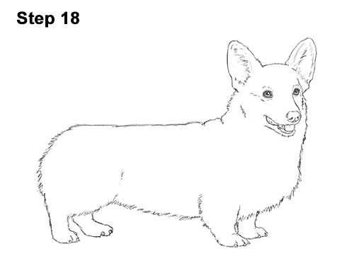 Draw Welsh Corgi Dog 18