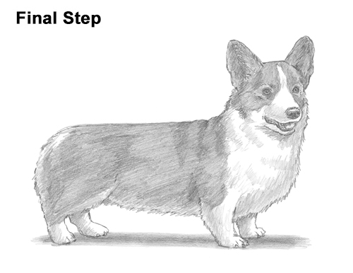 Draw Welsh Corgi Dog