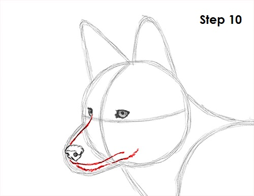 Coyote head drawing - photo#11