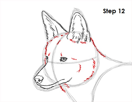 Coyote head drawing - photo#19