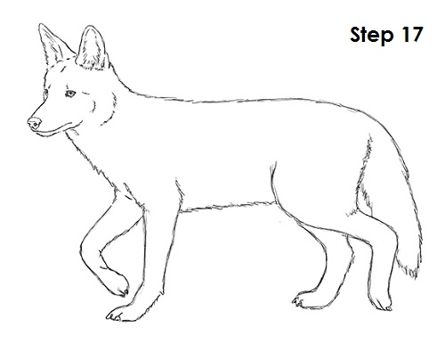 Easy Coyote Drawings How To Draw A Sketch Coloring Page