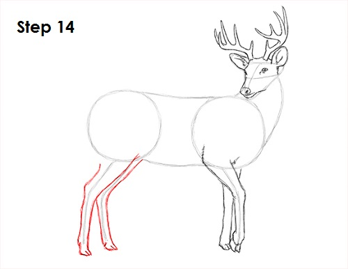 Deer Hoof Drawing Draw White Tailed Deer 14