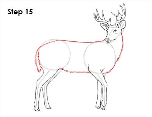 how to draw deer how to draw for kids how to draw step