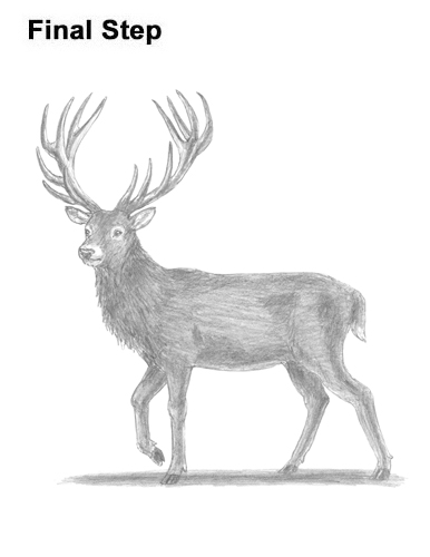 how to draw deer antlers easy