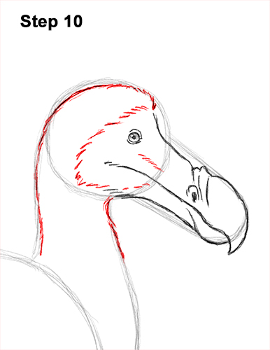 Draw Dodo Bird 10