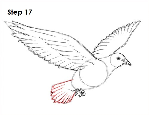 easy dove drawing - photo #25