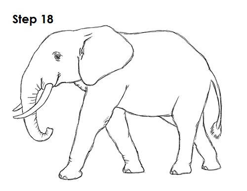 Line Drawing Of Elephant : How to draw an african elephant