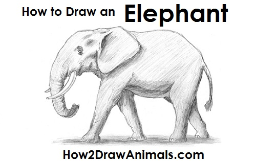 how-to-draw-african-elephant.jpg