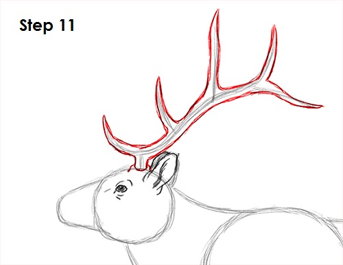 How To Draw A Turkey Step By Step Easy How to Draw an Elk