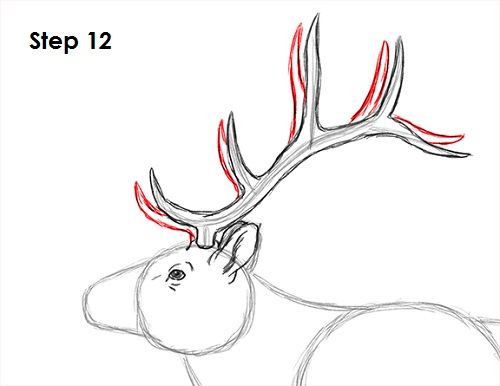 deer antlers drawing easy - photo #40