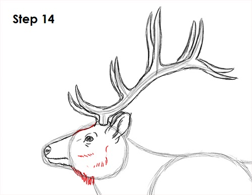 Line Drawing Head : How to draw an elk