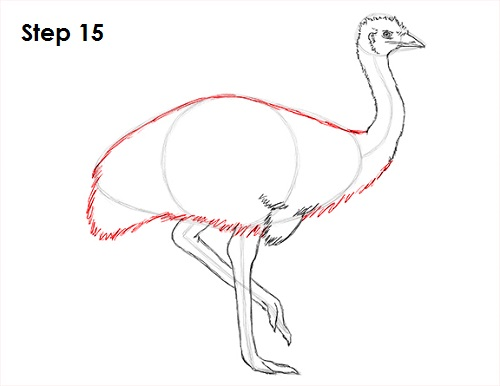 Draw Emu Bird 15