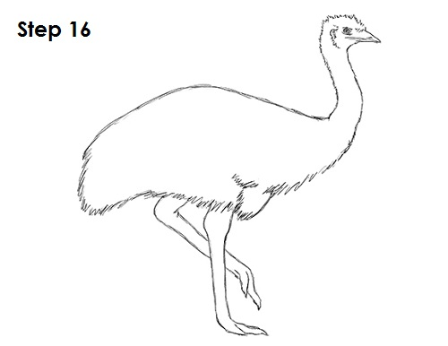 Draw Emu Bird 16
