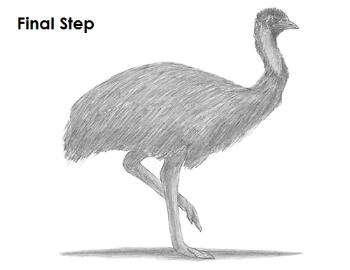 Draw Emu Bird Last