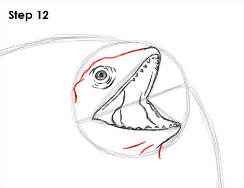 Draw Frilled Neck Lizard 12