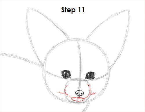 Draw Fennec Fox 11