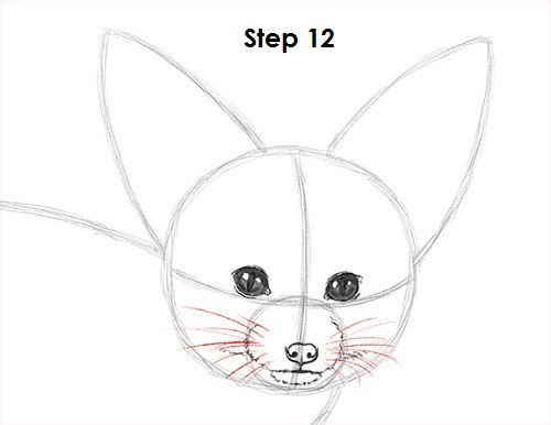 Draw Fennec Fox 12