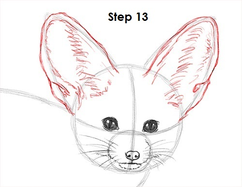 Draw Fennec Fox 13