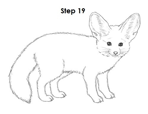 Draw Fennec Fox 19