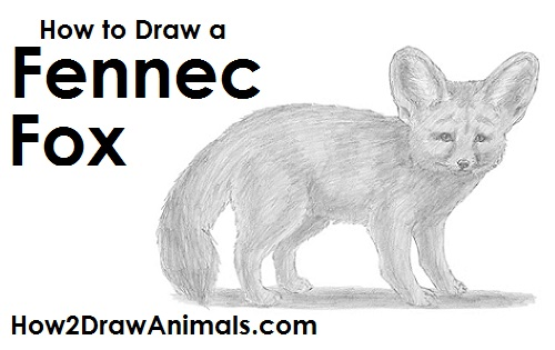 Draw a Fennec Fox