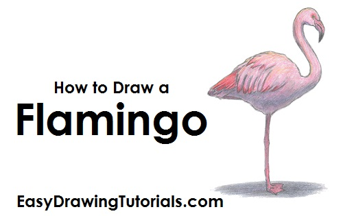 Draw Flamingo Bird