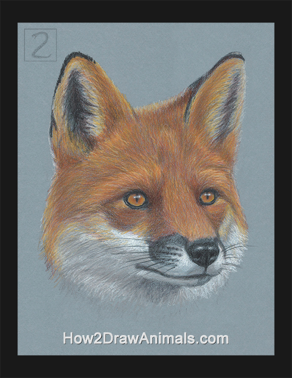 Red Fox Portrait Drawing