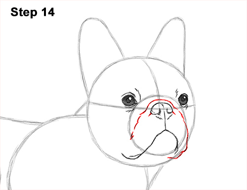 How to Draw French Bulldog Frenchie Puppy Dog 14