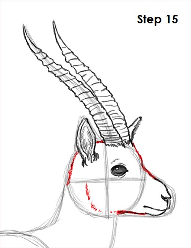 Gazelle head drawing - photo#18