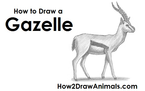 Gazelle head drawing - photo#20