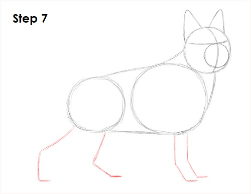 Draw German Shepherd Dog 7