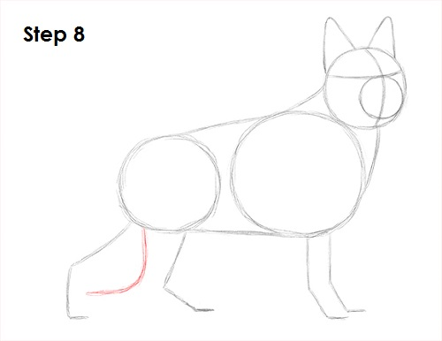 Draw German Shepherd Dog 8